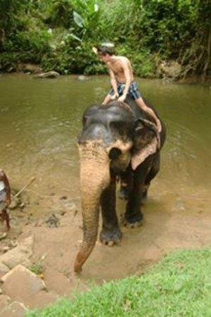 Kegalle, Sri Lanka: big animals like babies