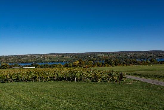 Dundee, estado de Nueva York: View of Seneca Lake from Glenora Wine Cellars