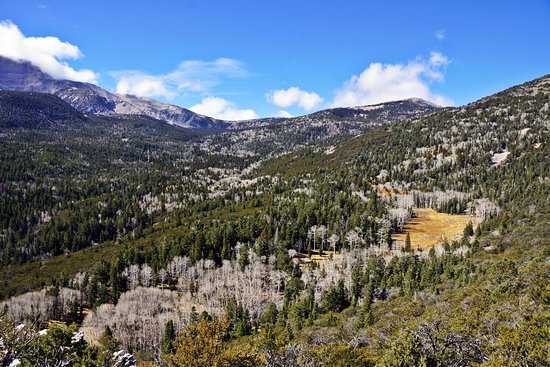 Baker, Невада: The park road snakes its way up the valley wall into the tall aspens and Bristlecone pines