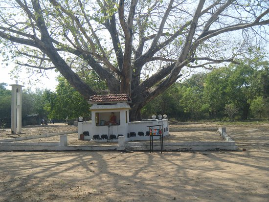 Eastern Province, ศรีลังกา: Bo tree at the entrance