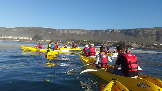 Hermanus, Sydafrika: Learning about the sea and the seals