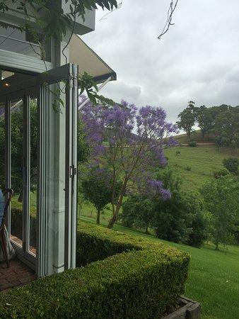 Mount View, Australia: Bistro Molines November 2015. jacaranda's blooming