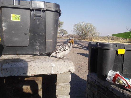 Camp Savuti: Have a bird