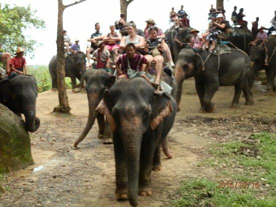 Chalong, Tajlandia: Elephant trek