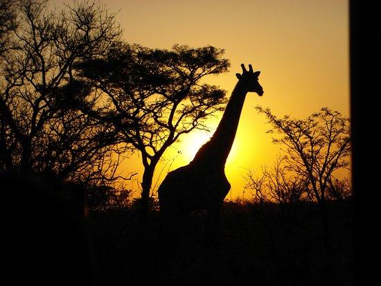 Welgevonden Game Reserve, Afrika Selatan: Night Drive