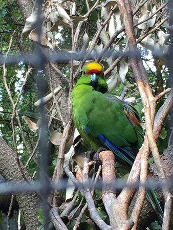 Kiwi Birdlife Park: photo4.jpg