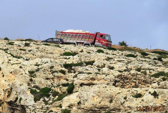Gros camoins sur la route des falaises de Dingli