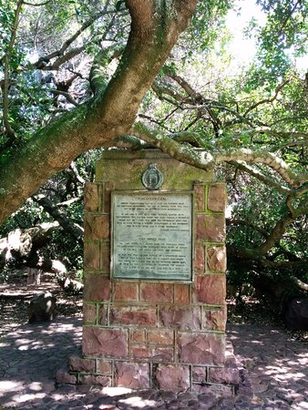 Mossel Bay, Sudáfrica: The Old Tree