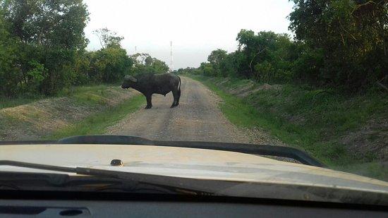 Kasese, Ουγκάντα: 20161014_071523_large.jpg