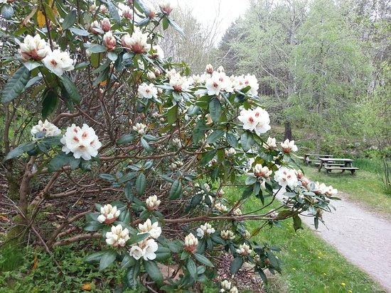 Sandnes, Noruega: From Rhododendron-valley