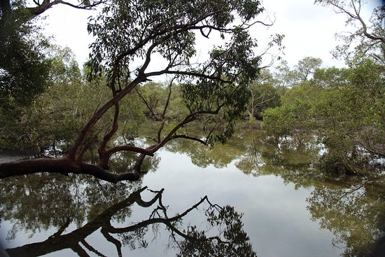 North Stradbroke Island, Australien: With the overcast day gave the beautiful reflections.