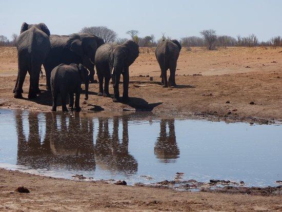 Hwange, Zimbabue: Lunch with Elephants