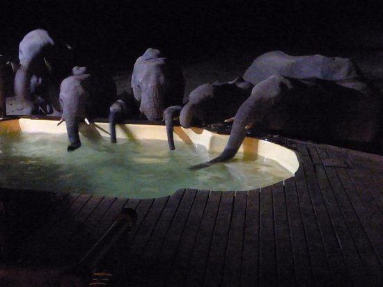 Hwange, Ζιμπάμπουε: Thirsty Elephants at the Pool