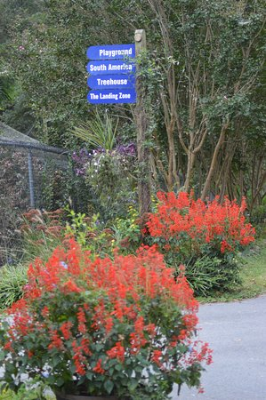 Scotland Neck, NC: colourful flowers all around the walk through aviaries.