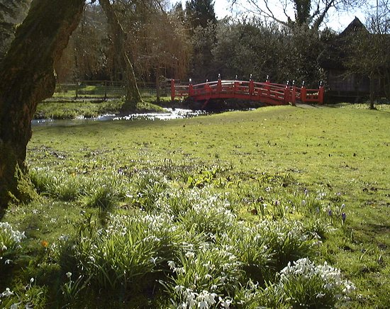 Heale Gardens: Snowdrops at Heale House