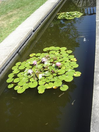 Ringwood, NJ: Fish in the lily pond.