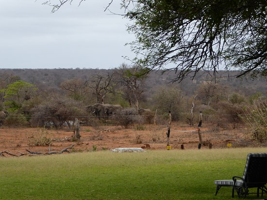 Mohlabetsi Safari Lodge Photo
