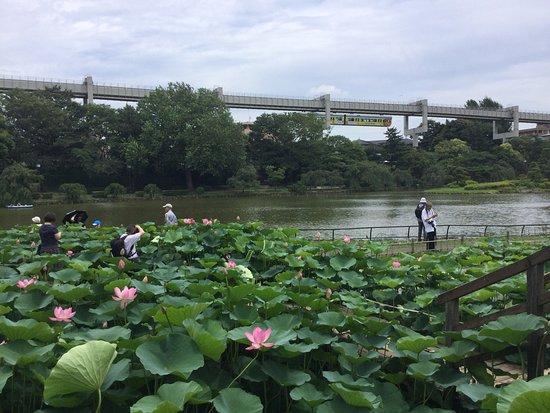 Chiba, Japonia: photo4.jpg