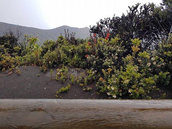 Province of Cartago, كوستاريكا: Vegetación
