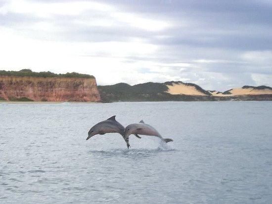 Resultado de imagen para Dolphins Bay, Brasil