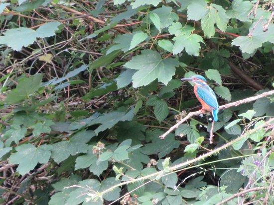 Chorley, UK: Elusive little fellow but saw a couple