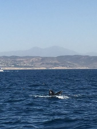 Dana Point, CA: Humpback Whale from whale watching trip