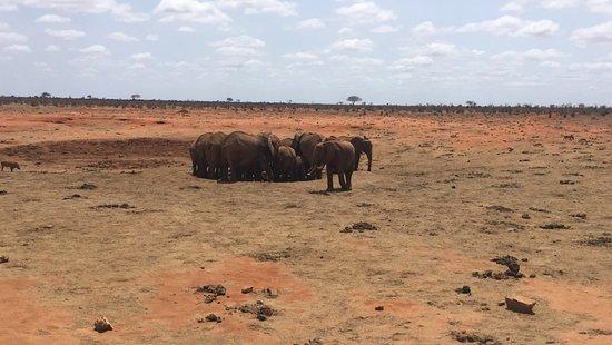 Bongo Safari- Day Tour : Elephants bursting a water pipe