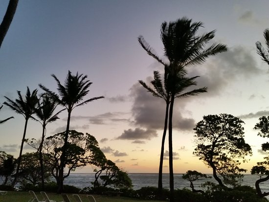 Kapaa Shores Photo