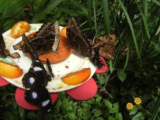 La Gueriniere, فرنسا: Le repas des papillons.