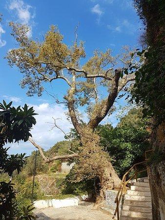 Argyroupolis, Grecia: Tree.