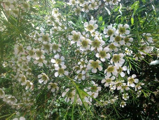 Rio Tinto Naturescape Kings Park : Wildflowers galore.