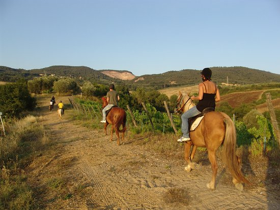 Montaione, إيطاليا: Horse back riding