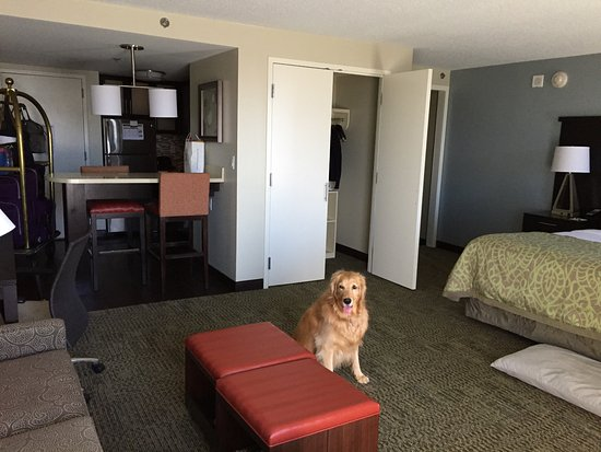 Staybridge Suites Atlanta   Midtown: Spacious King