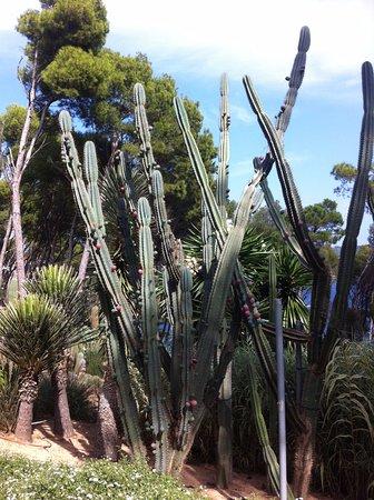 Entr e du chateau fotograf a de jard n bot nico de cap for Jardin botanico cap roig