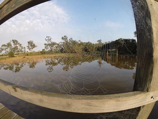 Gipsy Point, Australia: Surroundings