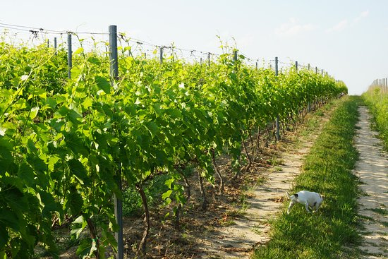 Plochocki Winery