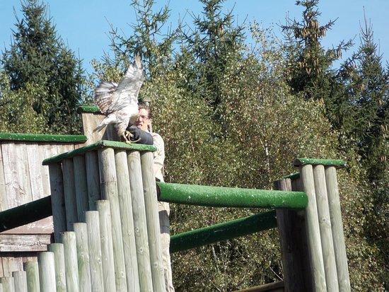 Ours blanc monda sauvage aywaille photo de le monde - Le monde sauvage meubles ...