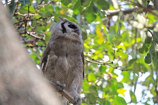 Linyanti Reserve照片