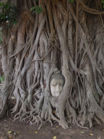 Marvin Suites: Sooking Budda embedded in tree roots