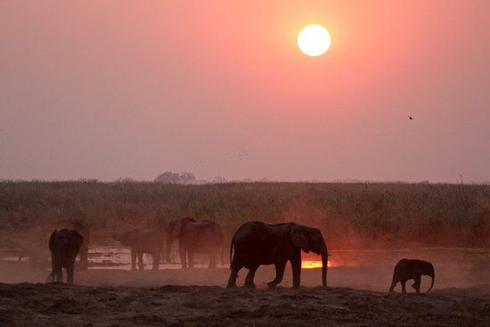 Linyanti Bush Camp: Linyanti, sundowners with the elephants