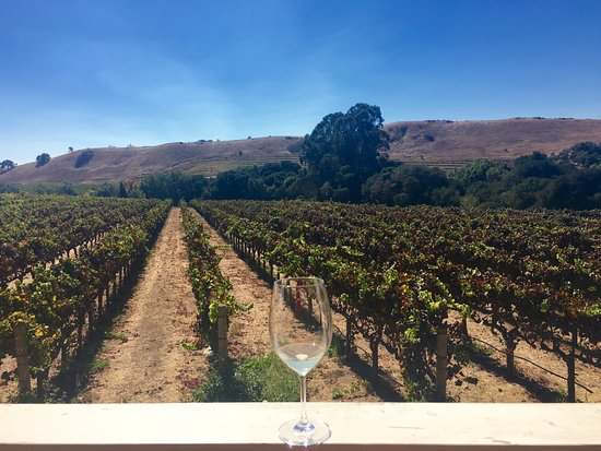 Napa Valley Wine Country Tours: Taken at Kieu Hoang Winery