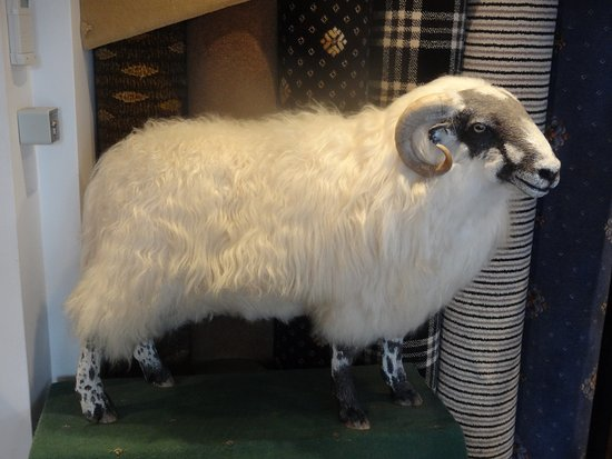 Kidderminster, UK: Model sheep - source of wool, of course