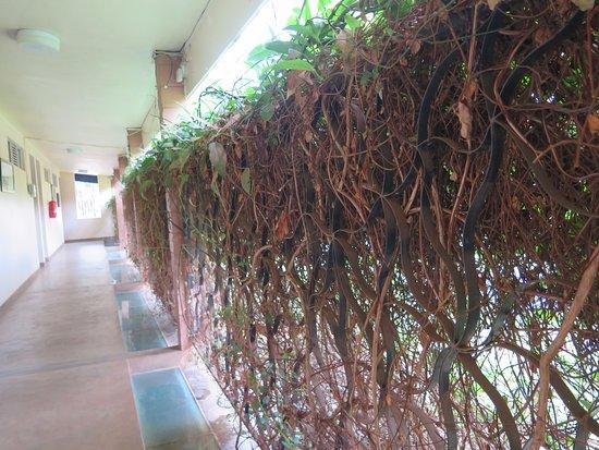 Humura Resorts Picture
