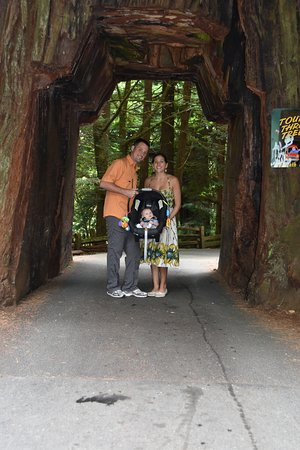 Klamath, Californie : Tour Thru Tree