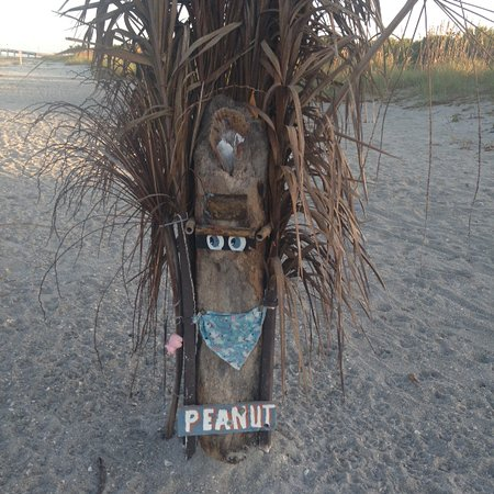 Venice, FL: Second Pee Tree to appear