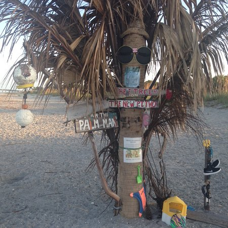 Venice, FL: Original Pee Tree blew out to sea in a storm. This is Pee Tree Two. Visitors to dog beach decora