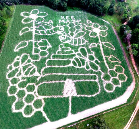 Ashburn, GA: Fall 2016 Bee Themed Corn Maze