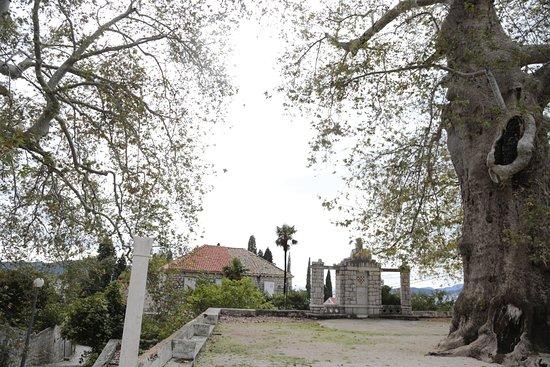 Trsteno, Croacia: 두나무의 모습
