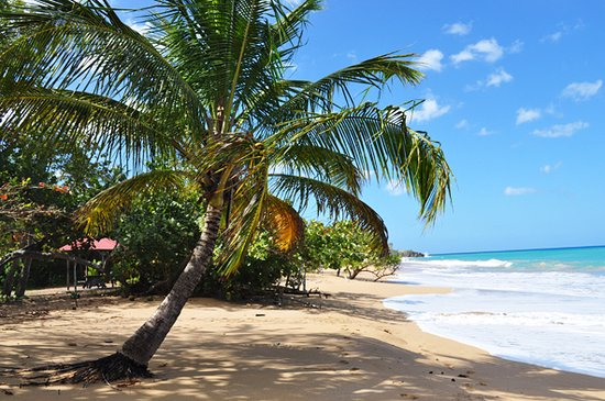Deshaies, Γουαδελούπη: extrémité gauche de la plage avec les carbets pour les pique-niques