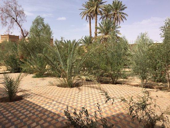 Delightful Desert Oasis